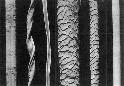 DNA鑑定や繊維鑑定はどれだけ正確?証拠になる?